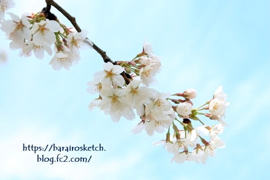 桜201803-12