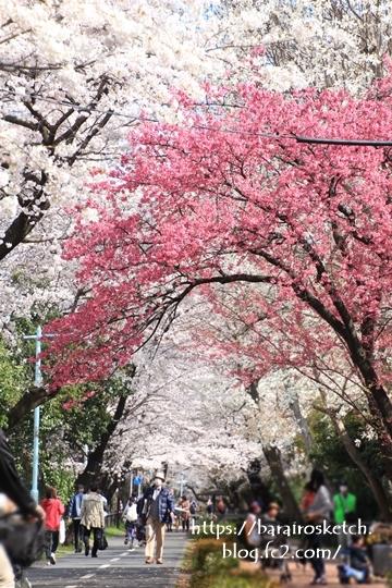 桜201803-13