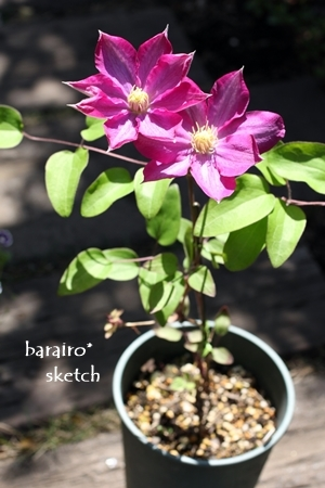 柿生201704-25