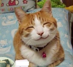 幸福 ネコ 幸せ
