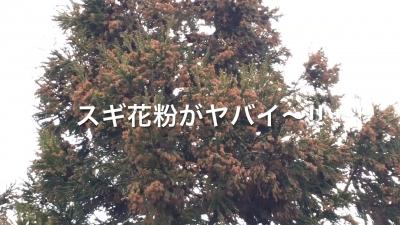 春の嵐から花粉の嵐へ!!(YouTubeムービー)