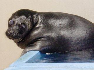 35歳で死んだバイカルアザラシのトント