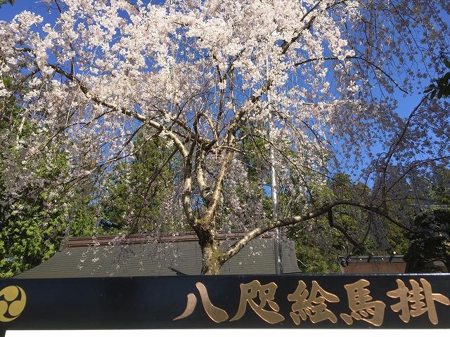 桜180324②