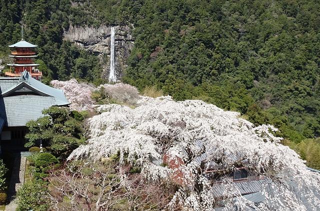 三重塔桜滝180324
