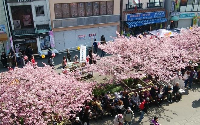 2018三浦海岸駅前の桜(2)
