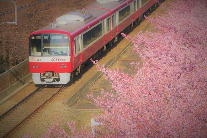 2018三浦海岸 桜と京急(3)