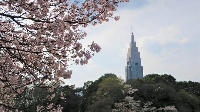 2018新宿御苑の桜(2)
