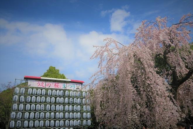2018年 上野公園の桜(1)