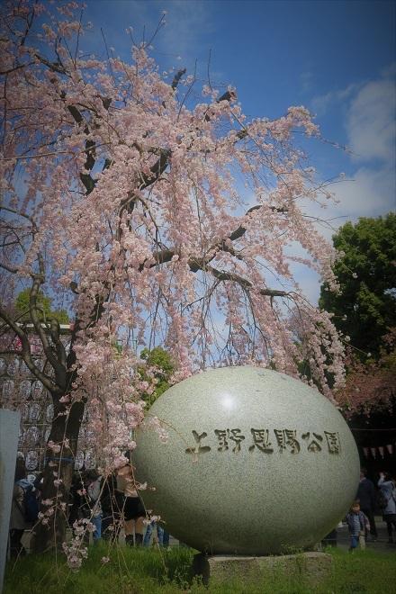 2018年 上野公園の桜(2)