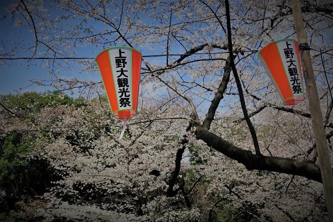 2018年 上野公園の桜(9)