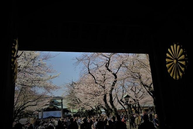 2018靖国神社の桜(1)