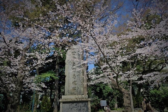 2018靖国神社の桜(2)