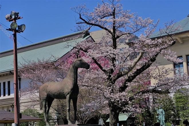 2018靖国神社の桜(6)