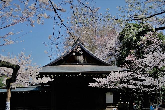 2018靖国神社の桜(7)