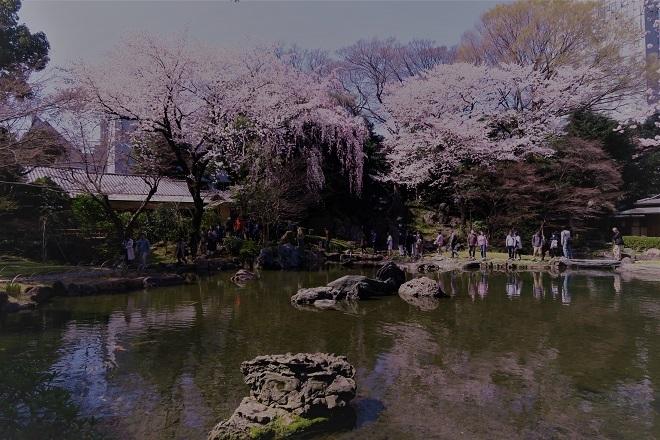 2018靖国神社の桜(8)