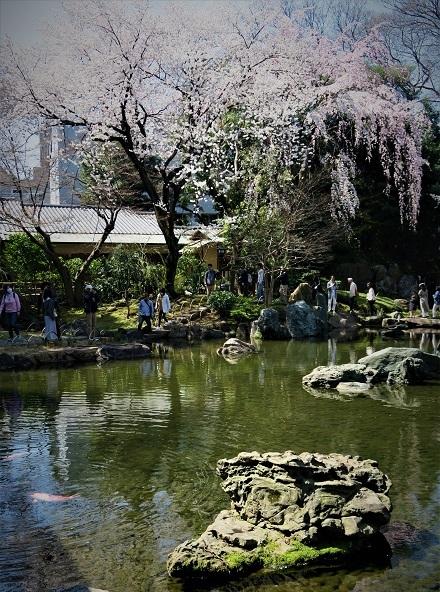 2018靖国神社の桜(9)