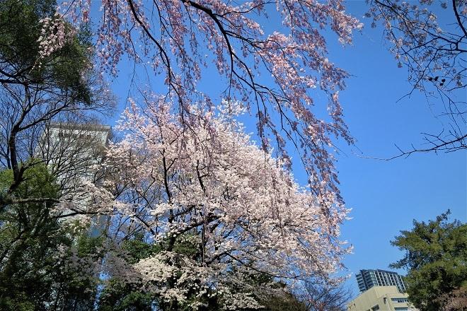 2018靖国神社の桜(10)
