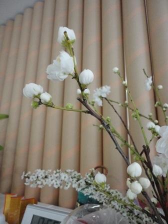 アーモンドの花②