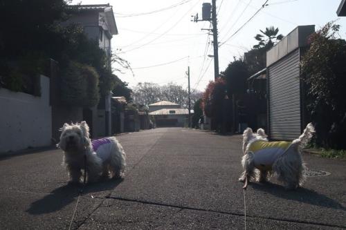 hyoronagainazonodoubutuyokogiru1.jpg