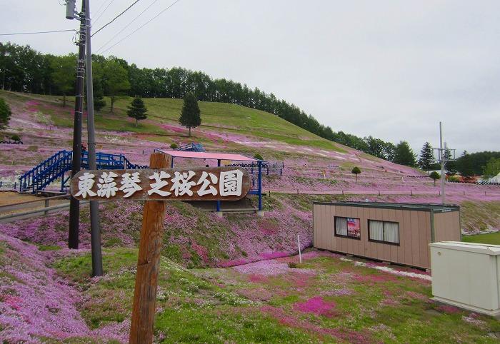 北海道 車中泊の旅 15日目  東藻琴芝桜公園