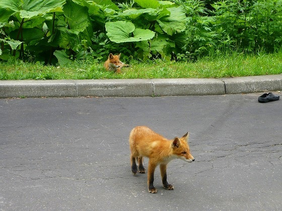 2009 北海道 車中泊の旅 49日目 サロマ湖展望台