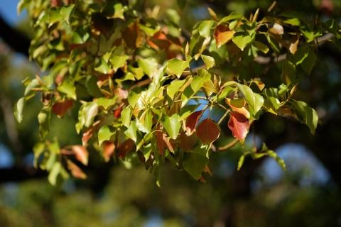 20横浜公園木々の春