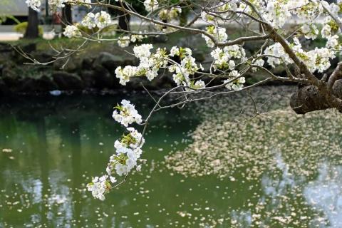 01北鎌倉名残の春