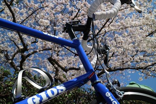 春でしょ、桜でしょ、ミニベロでポタリングでしょ!