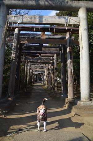 20180226厳島神社05