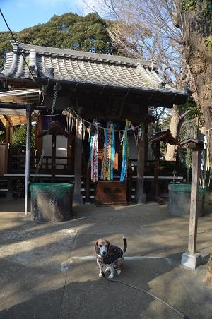 20180226厳島神社09
