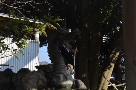 20180226厳島神社07