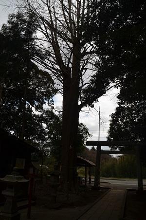 20180307鳥見神社26