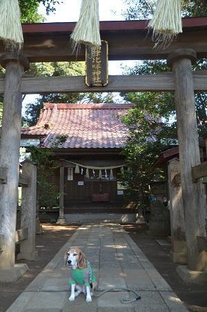 20180314高津比咩神社03