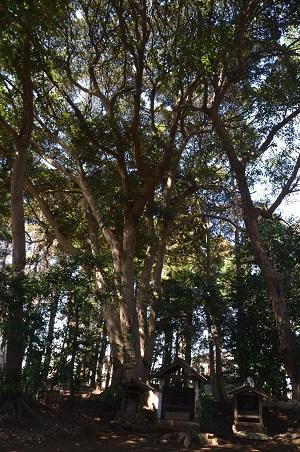 20180314高津比咩神社28