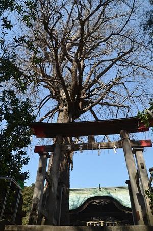 20180314二宮神社09