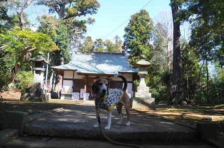 20180317駒形神社05