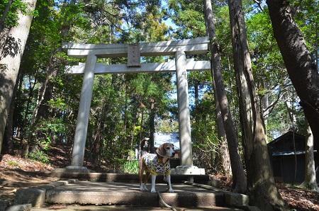 20180317駒形神社03