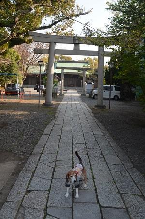 20180328浅間神社丸子神社06