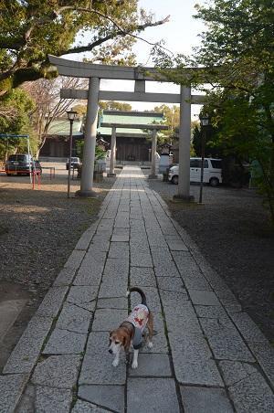 20180328浅間神社丸子神社05