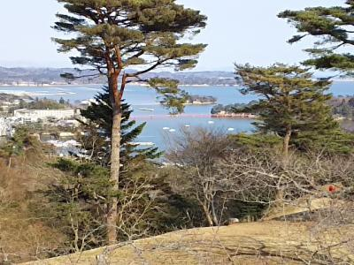 松島湾一望