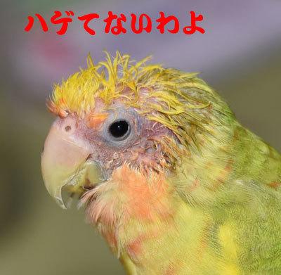 2_ハゲタカ