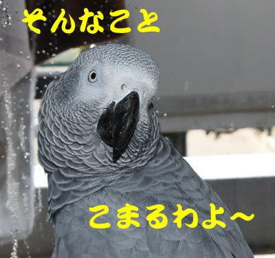 5_こまるわ