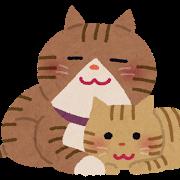 ネコ(じゃれる1