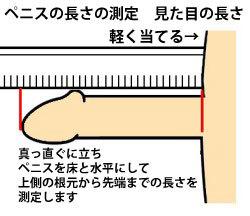 ちんこの測り方1