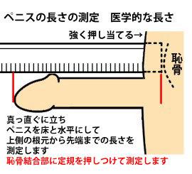 ちんこの測り方2