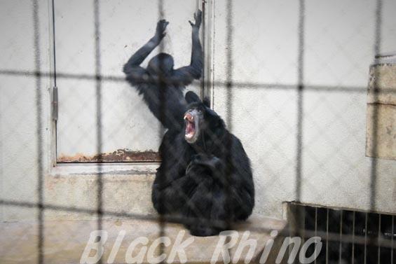 フクロテナガザル ナナ 天王寺動物園