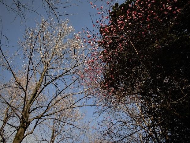 18.1.16 散歩三橋運動公園 (37)