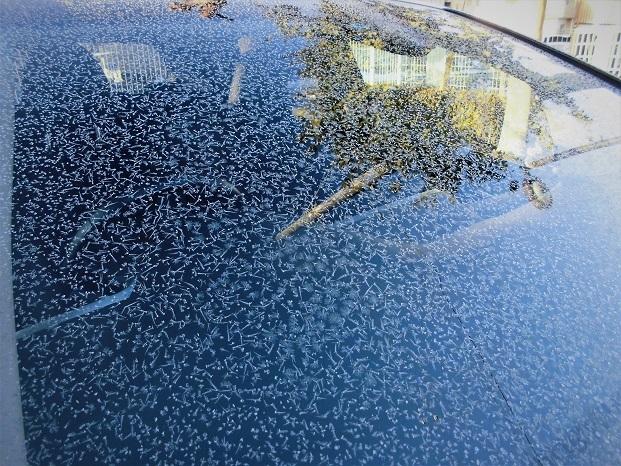 18.1.26  ブログ用 フロントガラスの霜 (24)