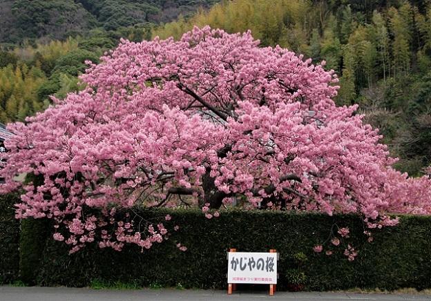 1 18.3.6-7 稲取・河津  (38)