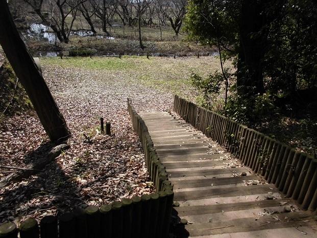 2 18.3.14 秋葉の森散歩・ミズキ (49)